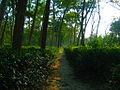 Kaptai tea-garden2.jpg
