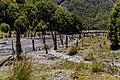 Karamea River, Wangapeka Track, Kahurangi National Park, New Zealand 19.jpg