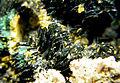 Kasolite-Vandenbrandeite-radmun-02a.jpg