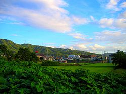Rice fields in Katano City