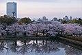 Kema-Sakuranomiya Park 2016-04-06 (26899268512).jpg