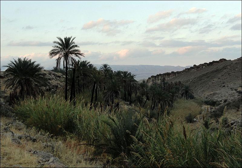 نخلستان خفرویه، جنوبغرب شهر علامرودشت