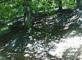 Kořeny - panoramio (1).jpg