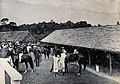 Kuching, Sarawak; horses being mounted in the racecourse pad Wellcome V0037400ER.jpg