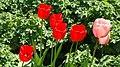 Kukkiahelsinkikesäsuomi57214757417515559DSC04222.JPG