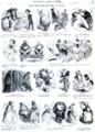 L'Illustration - 1858 - 029.png