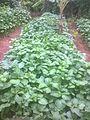Légumes 1.jpg