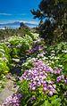 La Gomera, flowers by the path, Teide on Tenerife in far distance.jpg