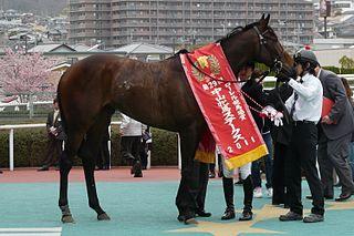 Nakayama Himba Stakes