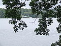 Lake Barrine with a view of the tea rooms and cruise boat.JPG