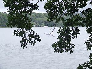 Lake Barrine - Viewed from the forest trail that encircles the lake