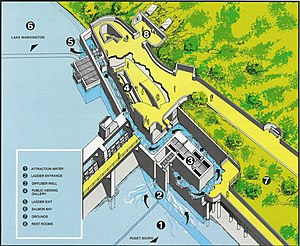 Cutaway drawing - Image: Lake Washington Ship Canal Fish Ladder pamphlet 02