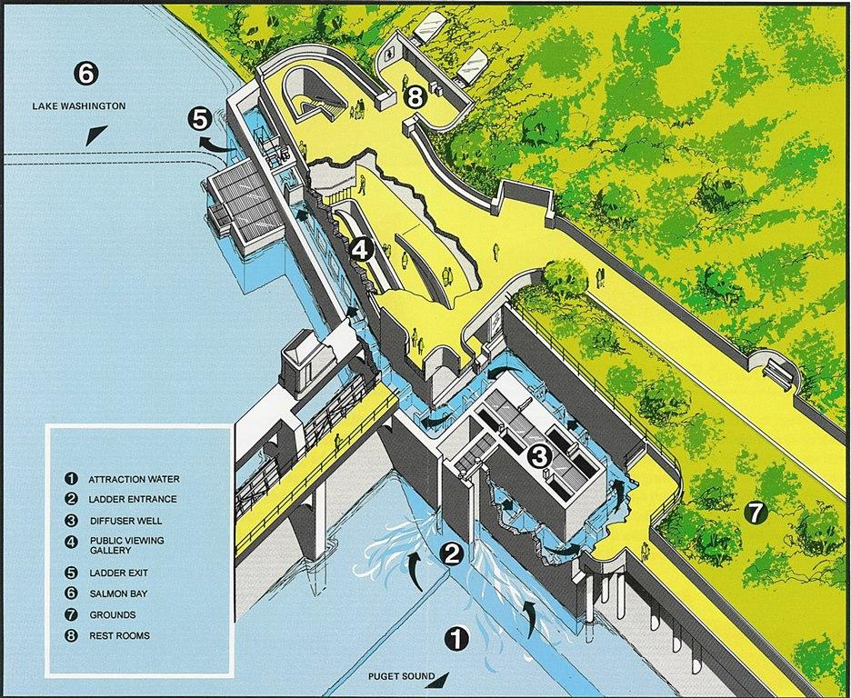 http://upload.wikimedia.org/wikipedia/commons/thumb/a/a6/Lake_Washington_Ship_Canal_Fish_Ladder_pamphlet_02.jpg/936px-Lake_Washington_Ship_Canal_Fish_Ladder_pamphlet_02.jpg?uselang=pt-br
