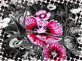 Lalbagh Flower Show 2010-8.jpg