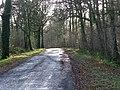 Lane from Elsted Marsh to Treyford - geograph.org.uk - 1722048.jpg