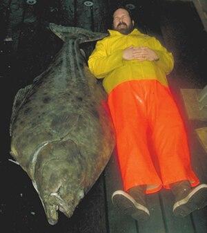 Pacific halibut - Image: Large Pacific halibut