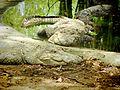 Large reptile.jpg