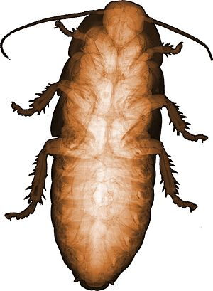 Medipix - Image: Large tropical cockroach