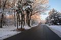 Las Bialoleka Dworska Waluszewska zachod zima 2.jpg