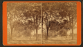 Laurel Grove Cemetery, from Robert N. Dennis collection of stereoscopic views.png