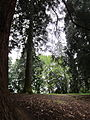 Laurelhust Park, Portland, May 21, 2012.JPG