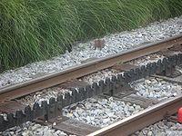 Lausanne Metro Track Closeup