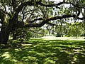 LebanonPlantationLiveOak.jpg
