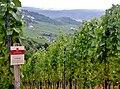 Lemberger, Besonders gehaltvolle und komplexe Spitzenweine durch konsequente Ertragsreduzierung - panoramio.jpg
