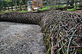 Living Willow and Elderberry Retaining Wall Mary O'Brien Adobe Creek Redwood Grove 2012.jpg