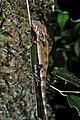 Lizard (36251932533).jpg