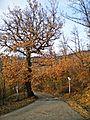 Localita' Docciola-natura 1.jpg