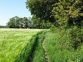 Looking SW along footpath from The Lynch - geograph.org.uk - 1328707.jpg