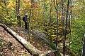 Lookout Trail - Algonquin Park - IMG 9707.jpg