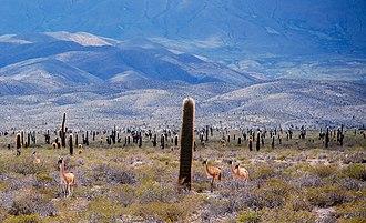 Los Cardones National Park - Image: Los Cardones National Park. Salta Argentina