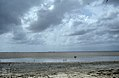 Louisiana heron, common egrets. Inagua, Windsor Lake (24005589937).jpg