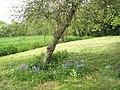 Lovely meadow by Donnington Cottage - geograph.org.uk - 789111.jpg