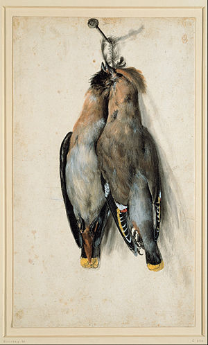 Waxwing - Two Dead Bohemian Waxwings by Lucas Cranach the elder, ca. 1530