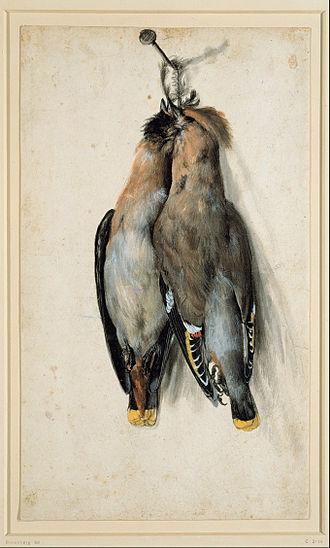 Waxwing - Two Dead Bohemian Waxwings by Lucas Cranach the elder, ca. 1530