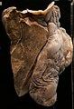 Lungs in museum.jpg