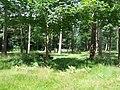 Lynford Arboretum Picnic Area - geograph.org.uk - 508857.jpg