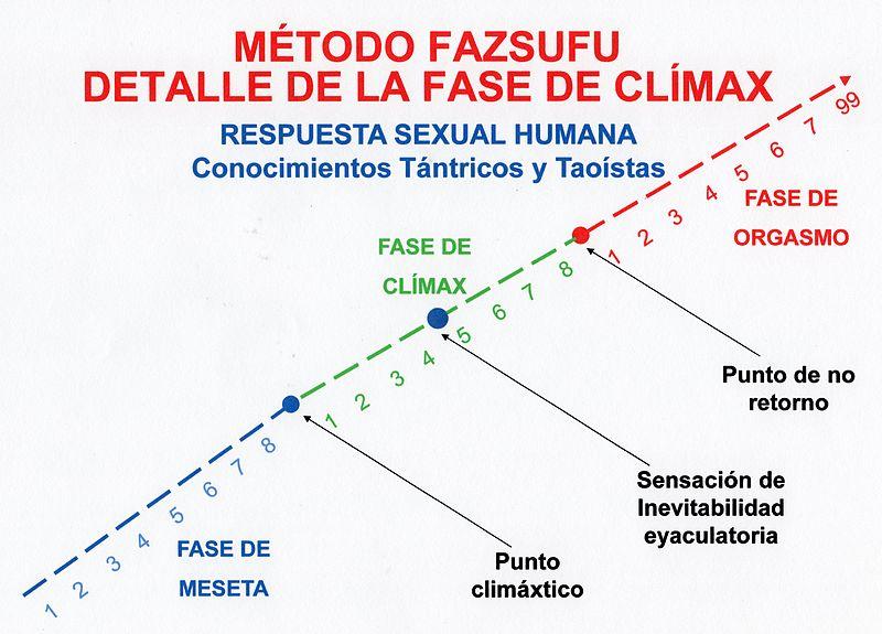 respuesta sexualidad humana fases