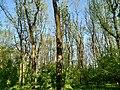 MD.DN.Rediul Mare - park of Rediul Mare - apr 2018 - 80.jpg