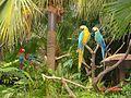 Macaw Ocean Park Hong Kong.JPG