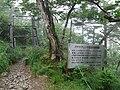 Magnolia sieboldii ssp. japonica reserve in Mt.Omine, Nara.jpg