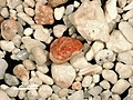 Marine biogenous aragonite sand (modern; sandy beach at French Bay, San Salvador Island, Bahamas) (48739969587).jpg