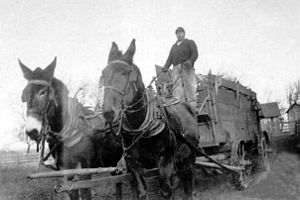 Farm - A farmer harvesting crops with mule-drawn wagon, 1920s, Iowa, USA