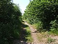 Marriott's Way, National Trail, near Themelthorpe - geograph.org.uk - 454464.jpg