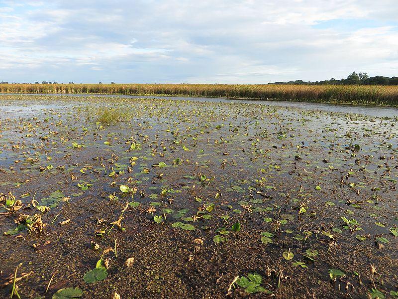 File:Marsh Boardwalk, Point Pelee National Park, Leamington, Ontario, Canada (21151639864).jpg