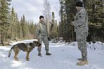 Military working dogs sharpen their skills at JBER 160317-F-YH552-046.jpg