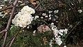 Mini Flores.jpg